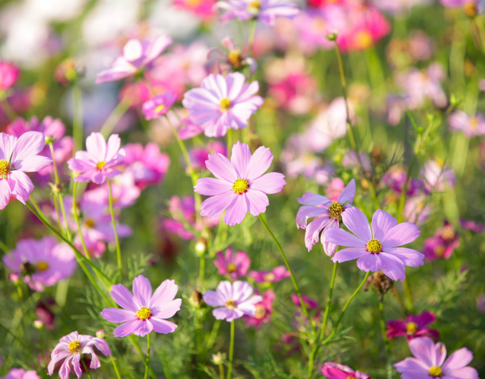 Fleurs Esnault Paysagiste à Saumur