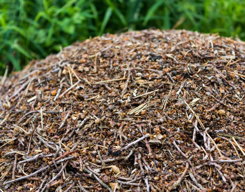 Photo tas de bois et compost Esnault Paysagiste à Saumur