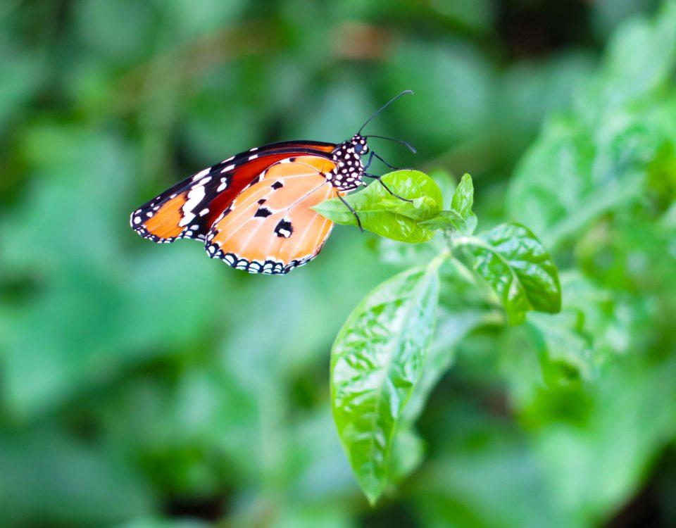 Papillon Esnault Paysagiste à Saumur