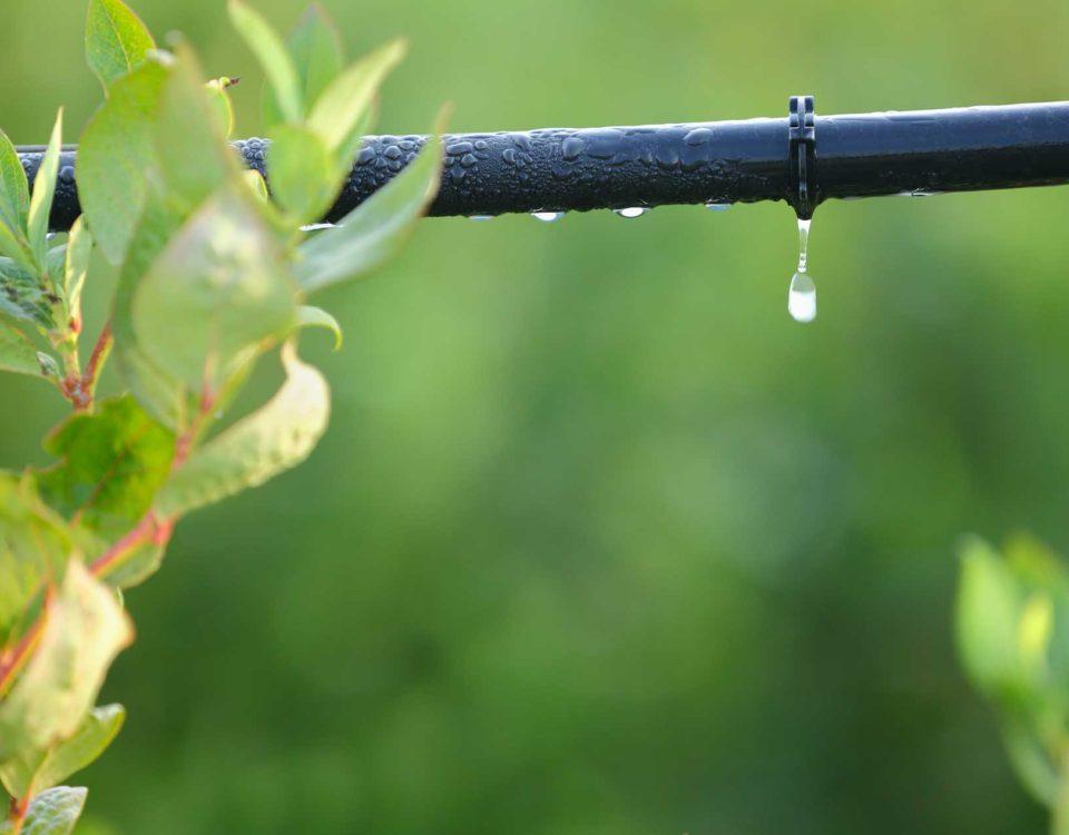 Engagement éco eau Esnault Paysagiste à Saumur