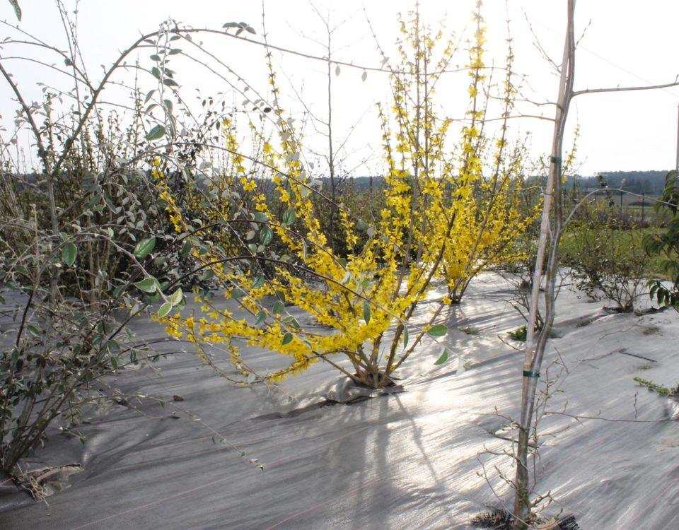 Création plantes Esnault Paysagiste à Saumur
