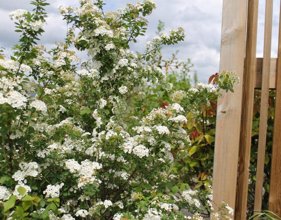 Clôture en bois avec plante réalisée par Esnault Paysagiste à Saumur